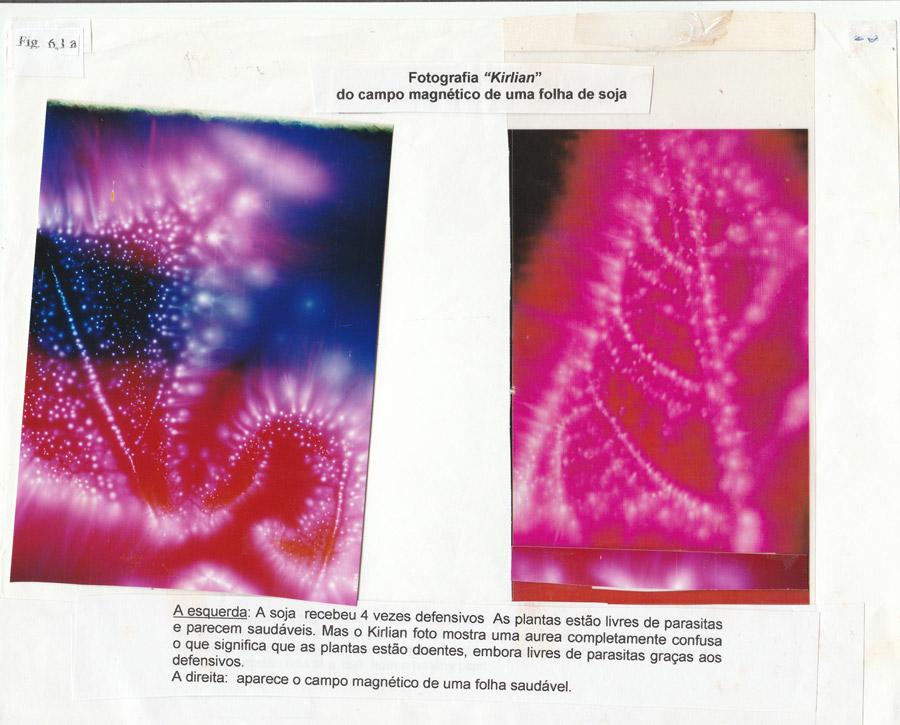 campo-magnetico-de-uma-folha-de-soja