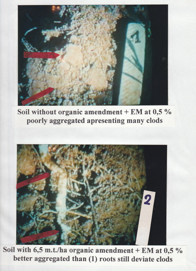 soil-without-organic-amendment--