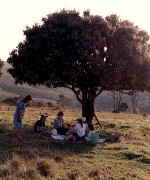 Sob a sombra da mangueira que ficava no topo do morro a família fazia piqueniques.
